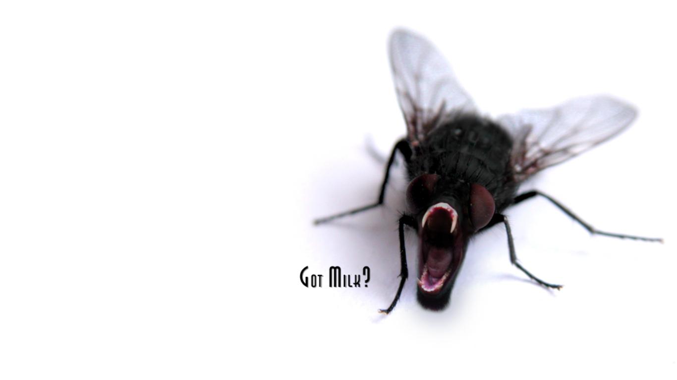 Картинки прикольные на аву с мухой, днем